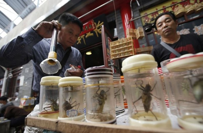 Как в Китае зарабатывают на сверчках
