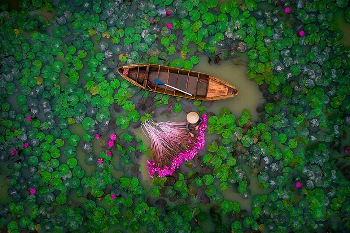 1. Водяные лилии. Вьетнам (2-е место в категории «Люди») (700x465, 539Kb)