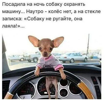 3085196_sobachka (439x411, 43Kb)