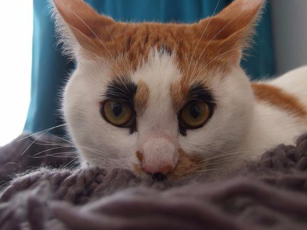 2. Макияжный кот (605x454, 143Kb)