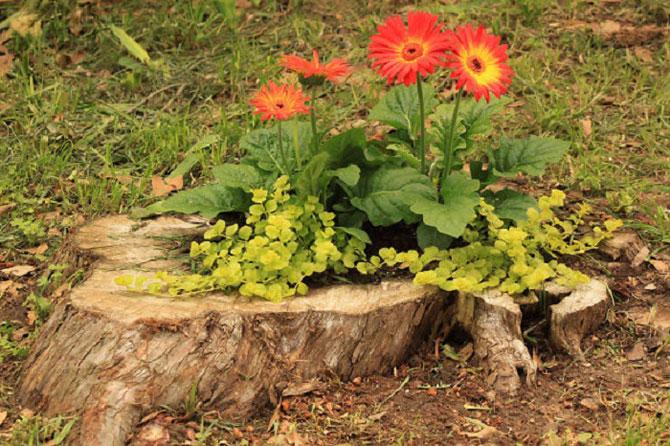 цветочки алые (670x446, 123Kb)