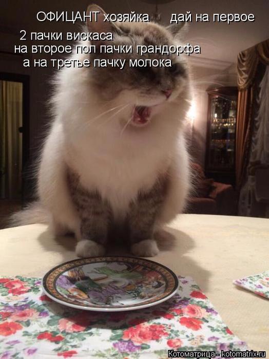 kotomatritsa__ (524x700, 332Kb)