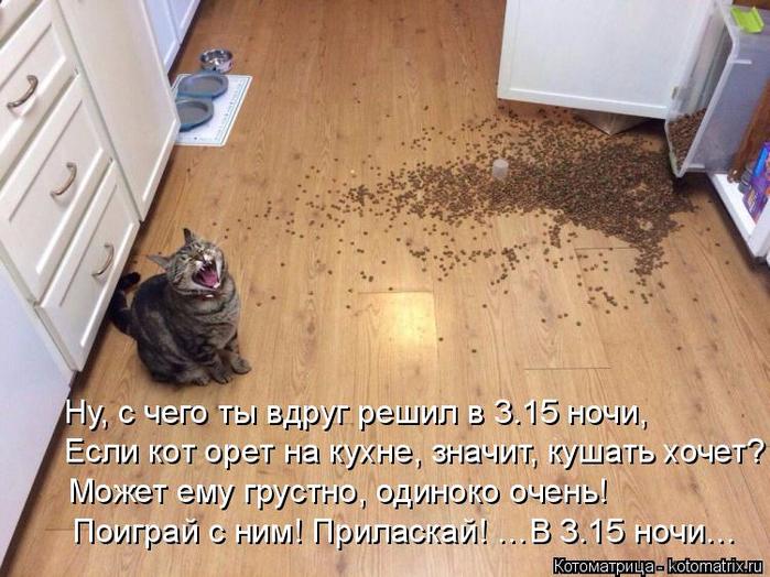 kotomatritsa_4 (700x524, 414Kb)