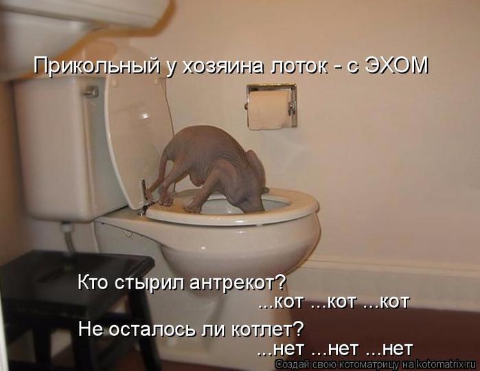 kotomatritsa_b (700x540, 243Kb)