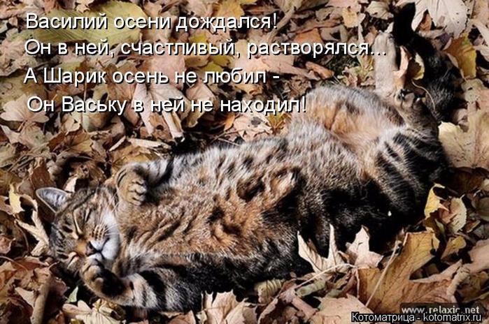 kotomatritsa_c (700x464, 439Kb)