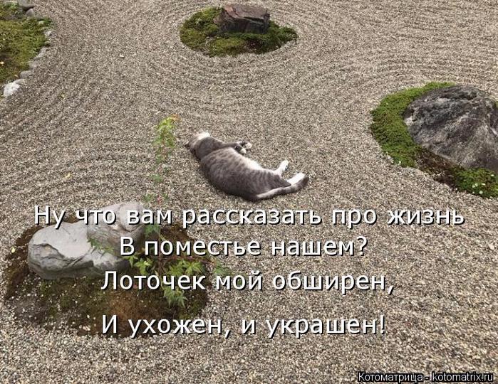 kotomatritsa_p (700x540, 482Kb)