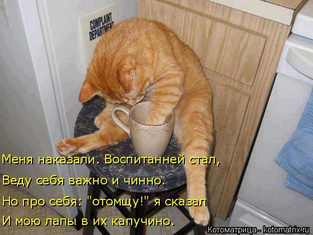 kotomatritsa_u (625x469, 287Kb)