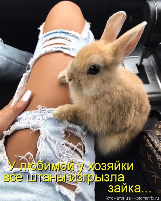 kotomatritsa_Y (560x700, 389Kb)