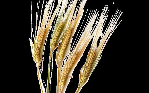nana.ge.(520x325, 183Kb)