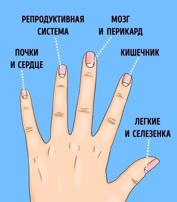 Диагностика здоровья по лунулам на ногтях