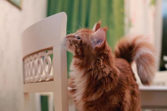 137408910 092417 0926 6 Поддаются ли коты воспитанию