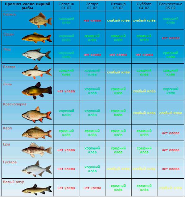 какой сегодня клев рыбы челябинская область