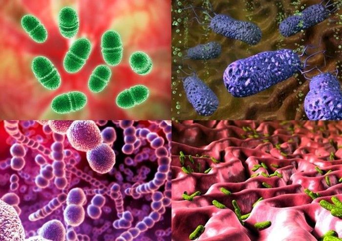 Что такое бактерии? Человек очень своеобразно относится к бактериям