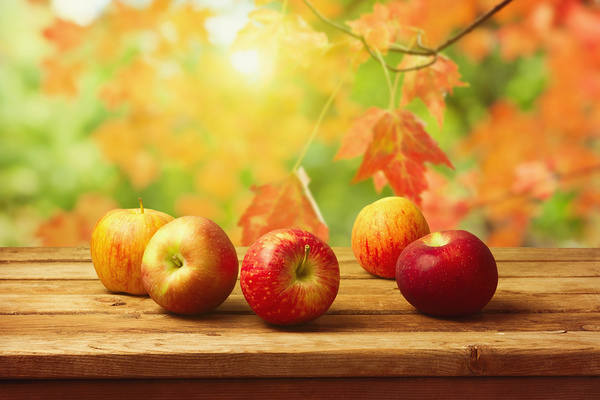 4026499_Fall_Background_with_Apples (600x400, 36Kb)