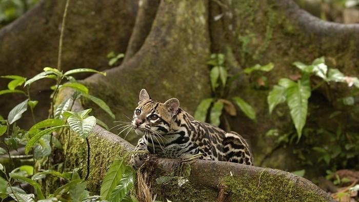 Большое фотопутешествие по лесам Амазонки (35 фото)