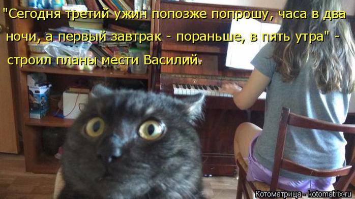 kotomatritsa_A (700x392, 320Kb)