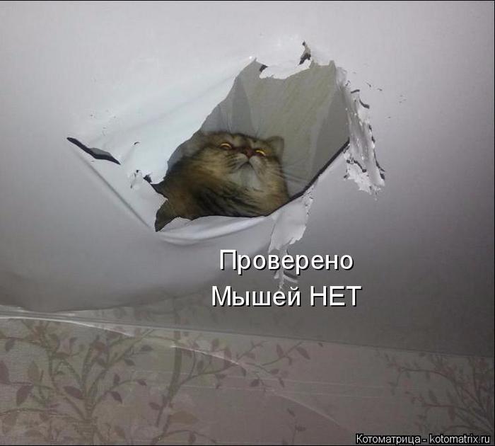 kotomatritsa_H (700x630, 215Kb)