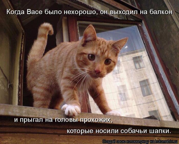 kotomatritsa_jl (700x563, 425Kb)
