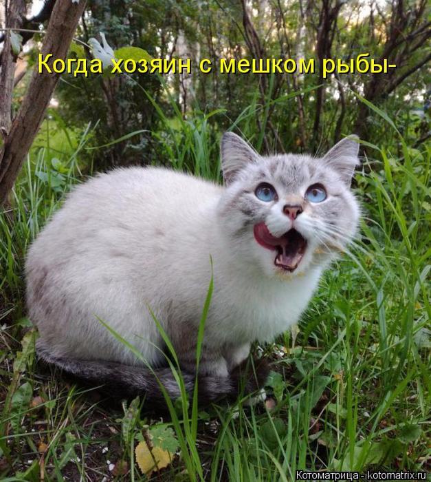 kotomatritsa_JZ (627x700, 534Kb)