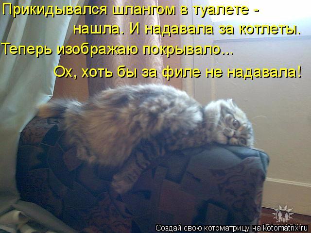 kotomatritsa_S (640x480, 293Kb)
