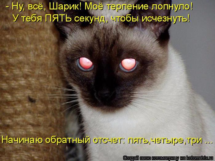 kotomatritsa_U (700x524, 393Kb)