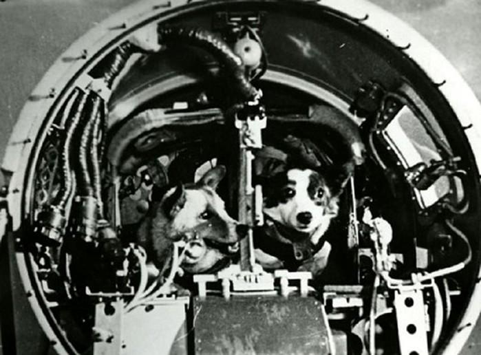 Дезик и Цыган   первые животные, поднявшиеся к верхним слоям атмосферы