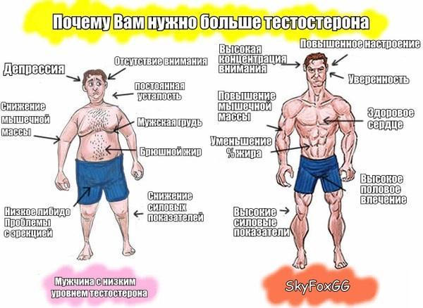 У мужчин каких народов самый высокий уровень тестостерона