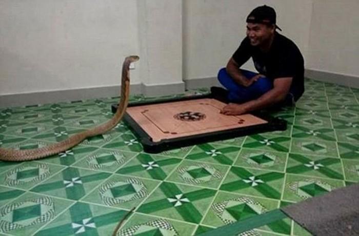 Парень из Таиланда женился на трехметровой змее