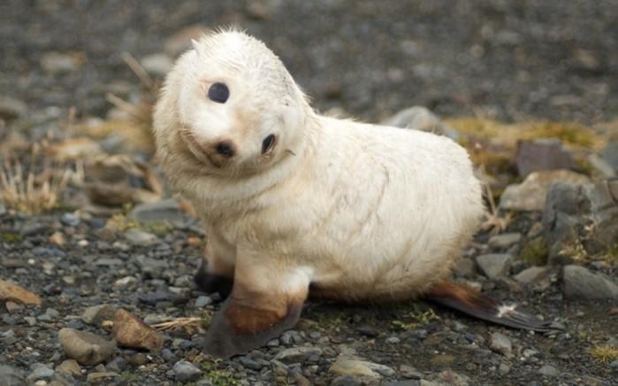 20 животных, которых тоже чертовски удивляет этот мир