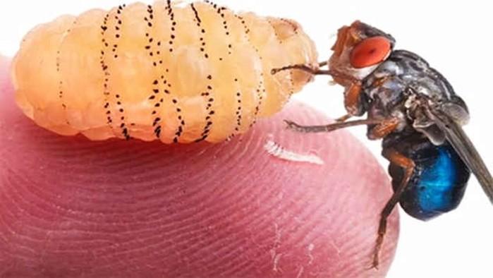 Самые необычные живые существа, которых медики извлекали из человеческого тела
