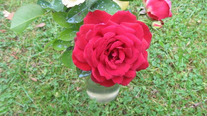 Роза (700x393, 105Kb)