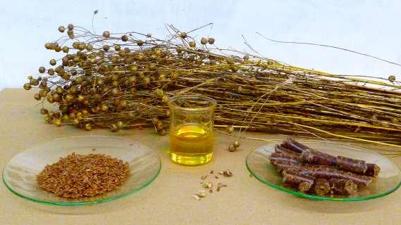 Льняное масло — здоровье и долголетие от природы