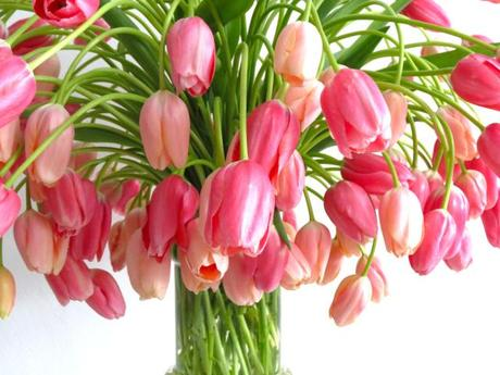 тюльпаны (460x345, 31Kb)