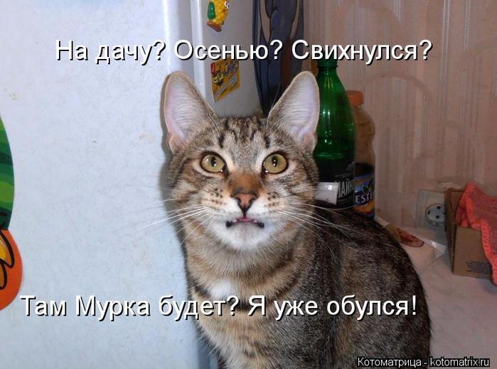 Обычная котоматрица и пять забавных фактов о котах