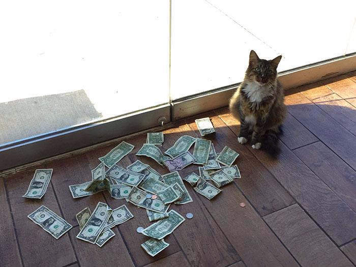 кот собирает деньги 1 (700x525, 206Kb)