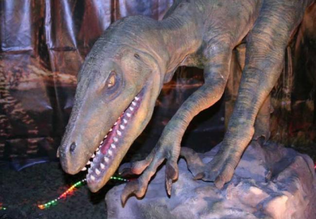5685413_dinozavr_jpgEkspoziciya_Planeta_dinozavrov (650x450, 44Kb)