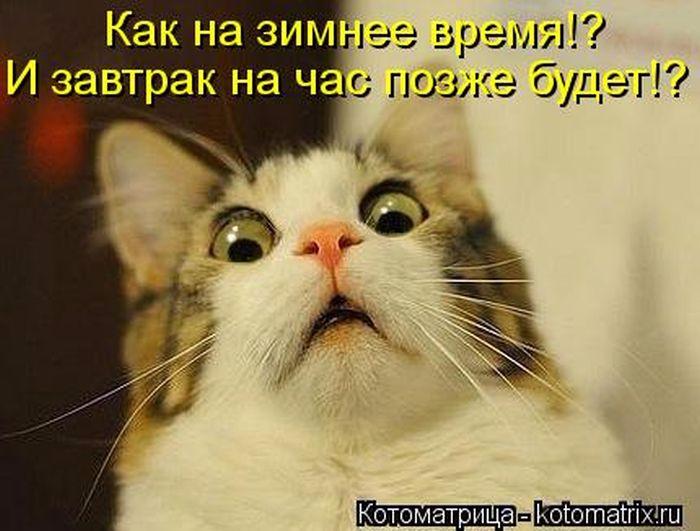 1381478512_kotomatrix_09 (700x531, 268Kb)