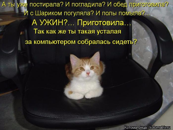kotomatritsa_Kv (700x524, 314Kb)