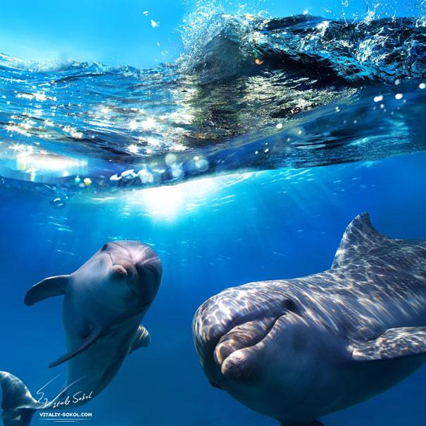 2. Дельфины обращаются друг к другу по имени (605x605, 317Kb)