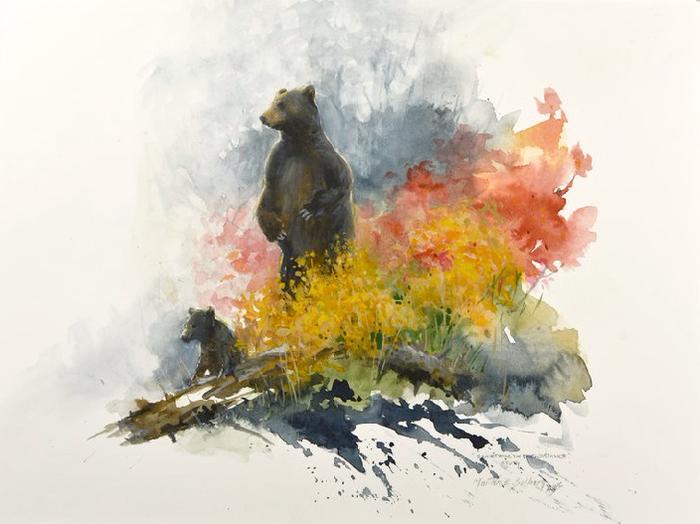 Idea Study Of Grizzly Bear (700x524, 282Kb)