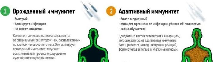 Иммунитет нужный/6173900_osnovnyeotlichiya1 (699x206, 49Kb)