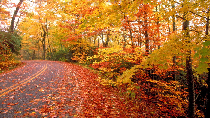 fall-nature-wallpaper-24 (700x393, 536Kb)
