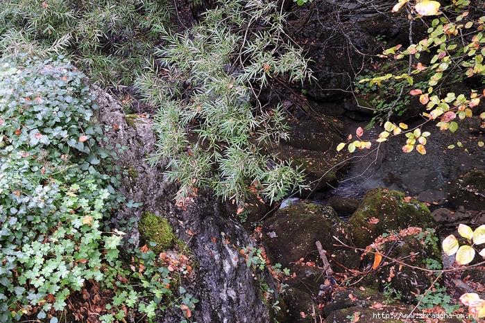 Shraddha_trаvel  Греция октябрь 2017 (86) (700x466, 496Kb)
