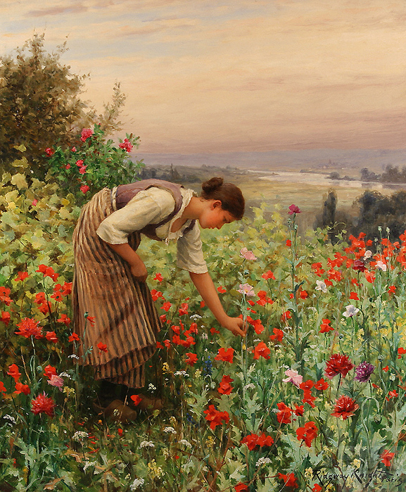 5685413_15034459_Daniel_Ridgway_Knight__Girl_Picking_Poppies (577x699, 429Kb)