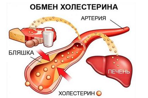 От холестерина/6174149_statiny1 (513x342, 229Kb)