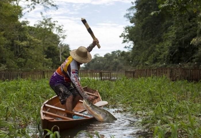 Секреты путешествия по Амазонке