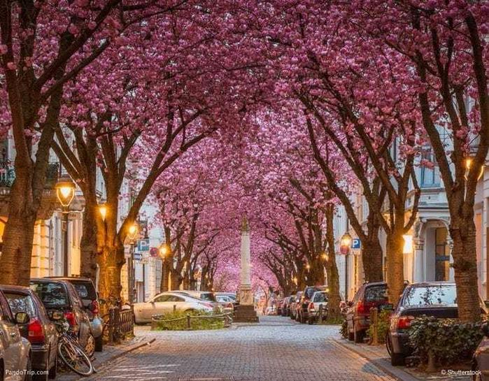 Top_14_must_beautiful trees (14) (700x545, 516Kb)