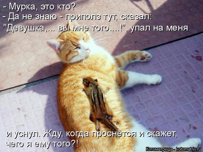 kotomatritsa_- (1) (700x523, 394Kb)