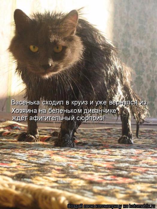 kotomatritsa_aQ (524x700, 400Kb)