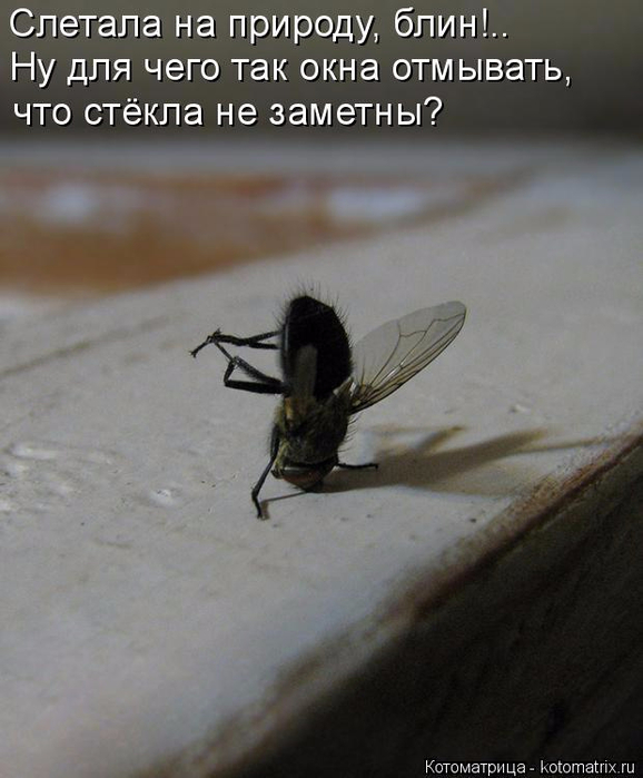 kotomatritsa_Io (578x700, 276Kb)
